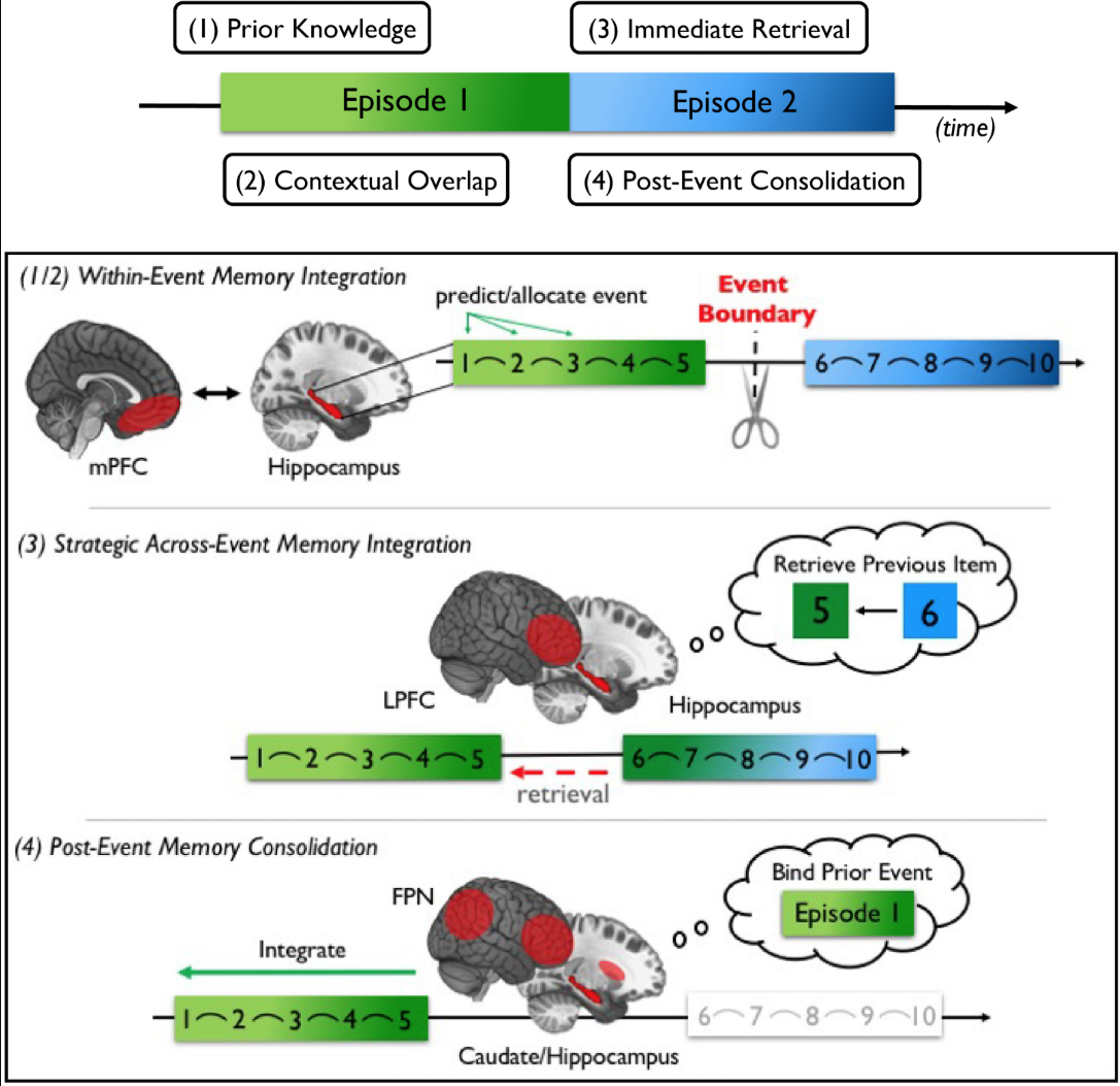 Figure summary of neural processes that support proactive and retroactive memory integration at shorter timescales